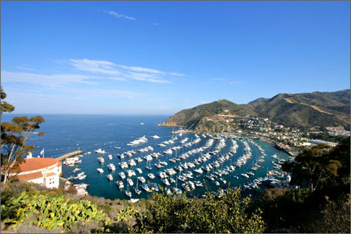 Download this Catalina Island Tour Reservations picture
