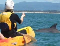 Dolphin Sea Kayak Tour