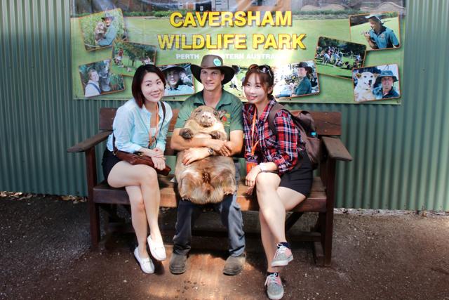 Penguin Island & Caversham Wildlife Park Day Tour