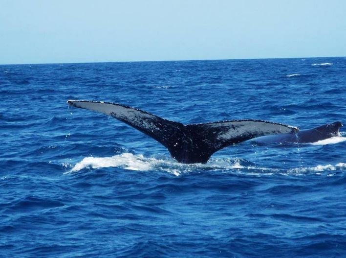 Sunshine Coast Extreme Whale Watching Cruise