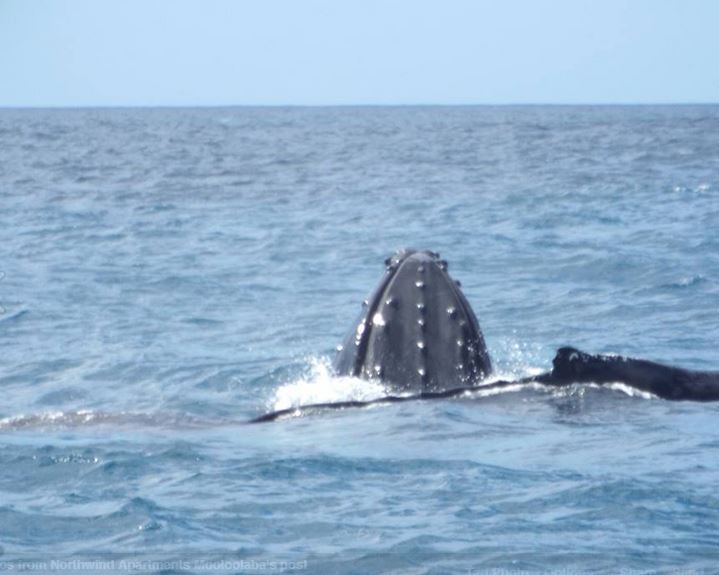3-Hour Sunshine Coast Whale Watching Cruise