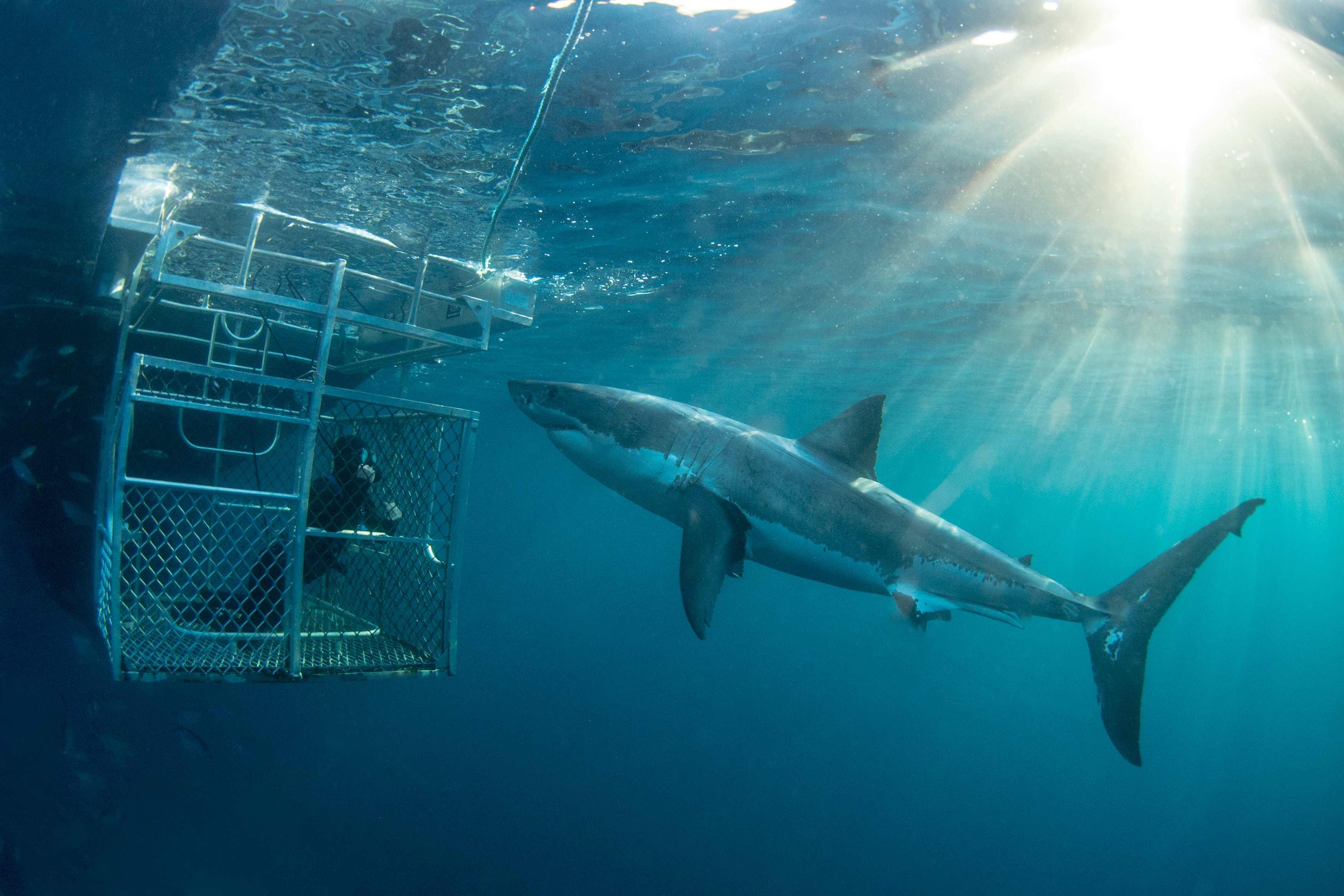 500 Rodney Fox Shark Expedition Gift Card Rodney Fox